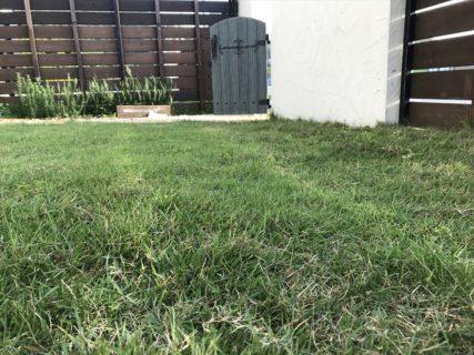芝生メンテナンスは大変・・