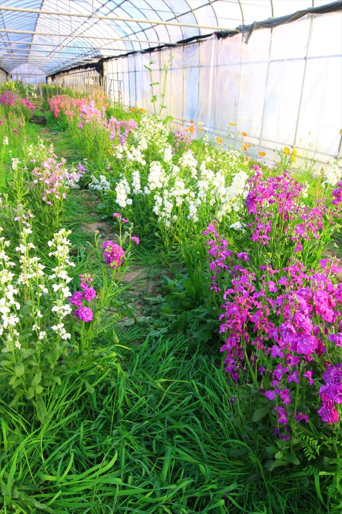 花摘み園チースの里